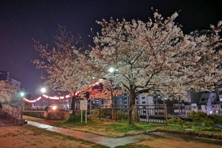 お得な春のNEWプランご案内!【神戸なでしこ屋】